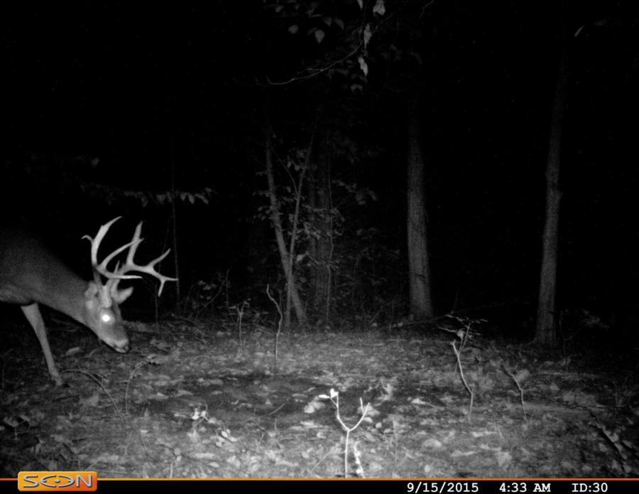133-acres-pope-county-whitetail-property-for-sale-11.jpg