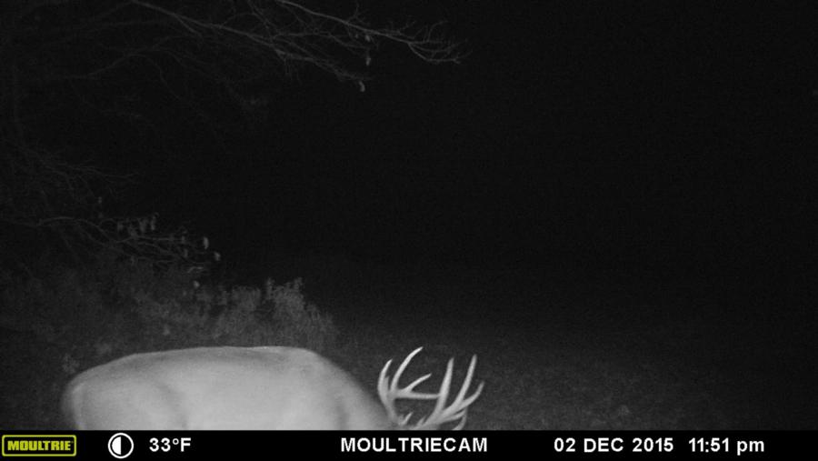 133-acres-pope-county-whitetail-property-for-sale-12.jpg