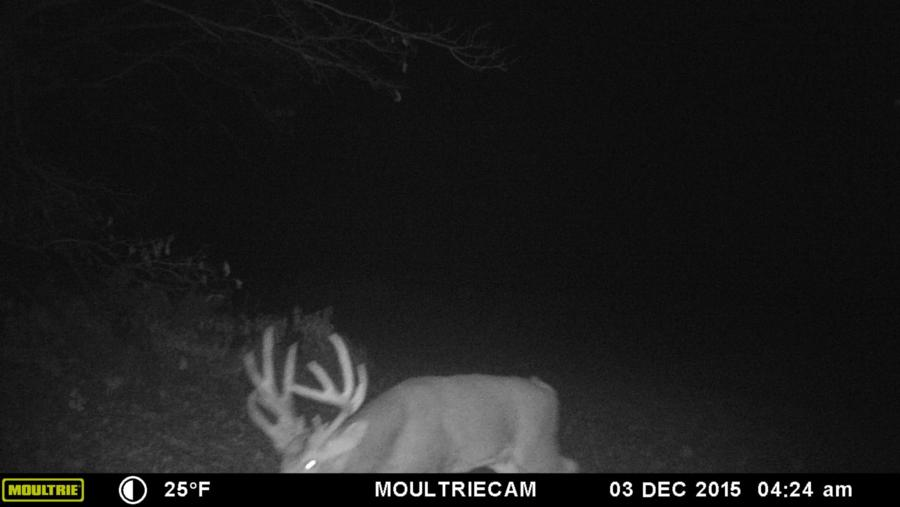 133-acres-pope-county-whitetail-property-for-sale-13.jpg