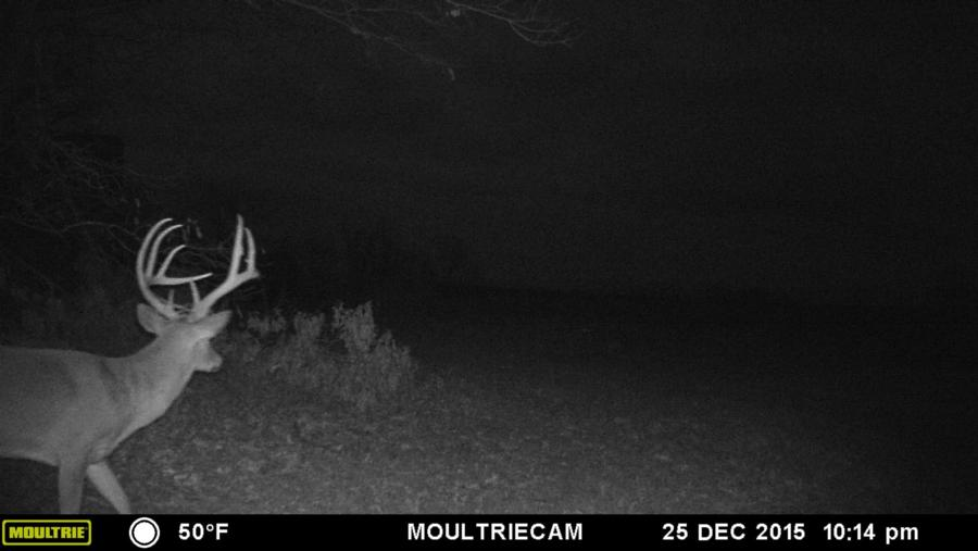 133-acres-pope-county-whitetail-property-for-sale-15.jpg