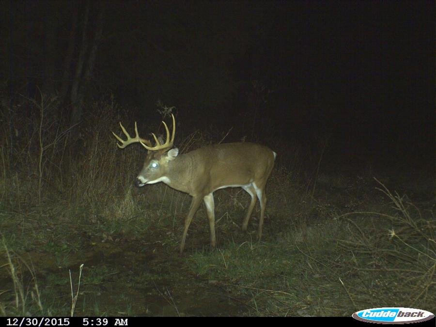 133-acres-pope-county-whitetail-property-for-sale-16.jpg