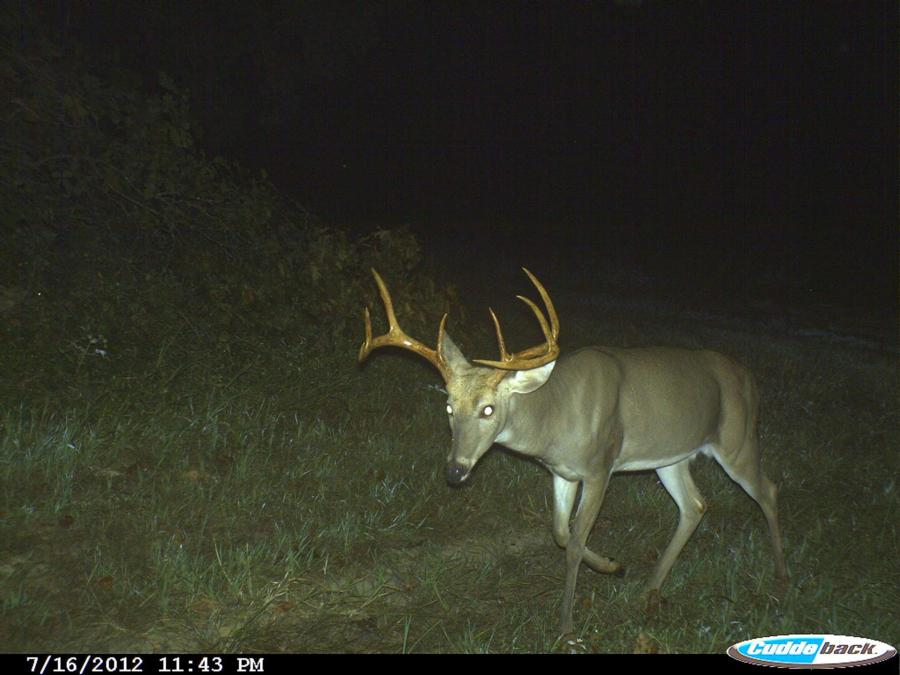 133-acres-pope-county-whitetail-property-for-sale-17.jpg