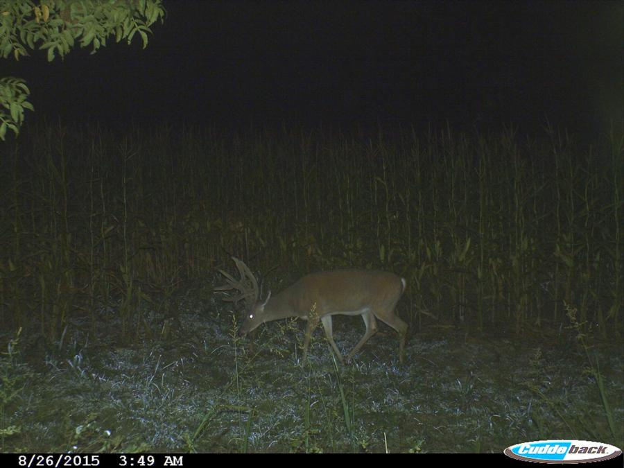133-acres-pope-county-whitetail-property-for-sale-8.jpg