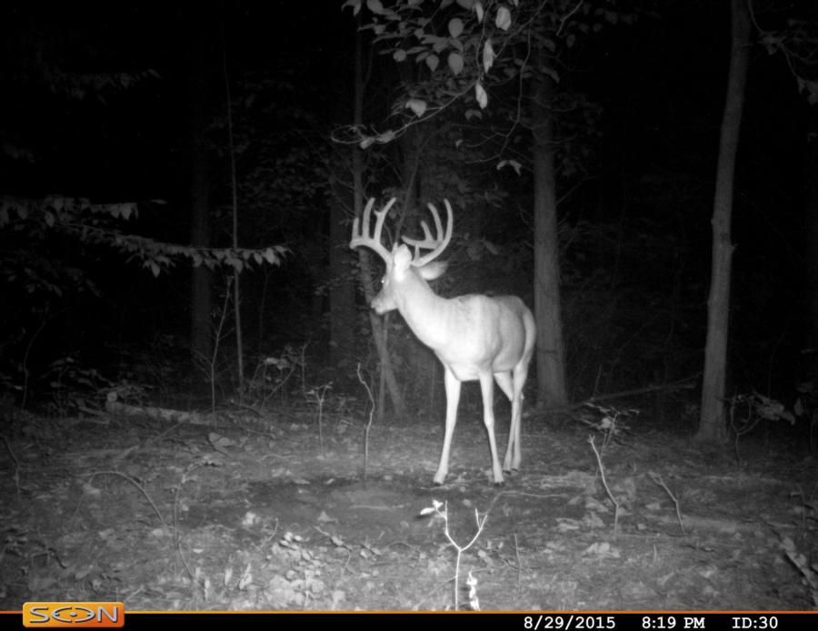 133-acres-pope-county-whitetail-property-for-sale-9.jpg